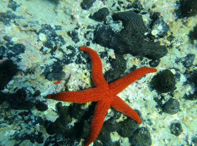 Scuba Diving in Thassos