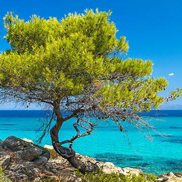 7 days cruise to Chalkidiki -Aristotle
